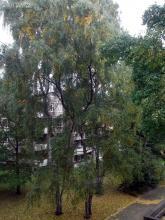 Idyllischer Ausblick aus der Unterkunft in Hamburg, 11.10. 2.013